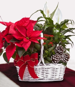 Holiday Poinsettia Gift Basket